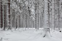 Winterwald01