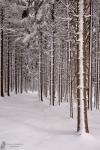 Winterwald02
