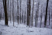 Winterwald03