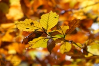 Herbst01